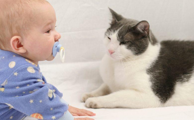 tips para la alergia de los gatos