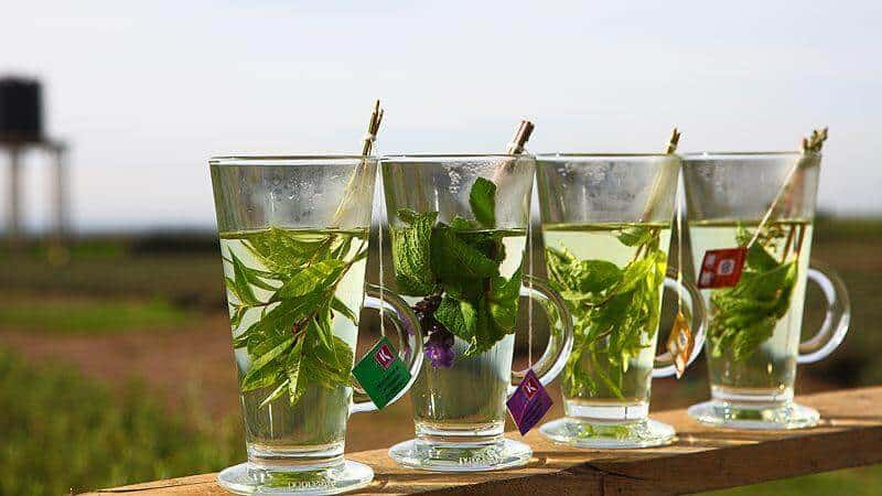 infusiones herbales