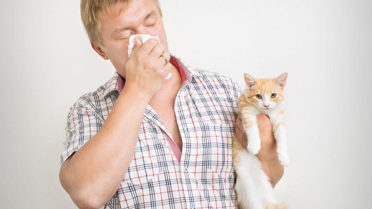 que causa la alergia a las mascotas